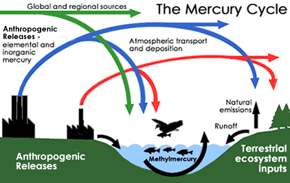 diagram showing the methylmercury cycle discussed in the text