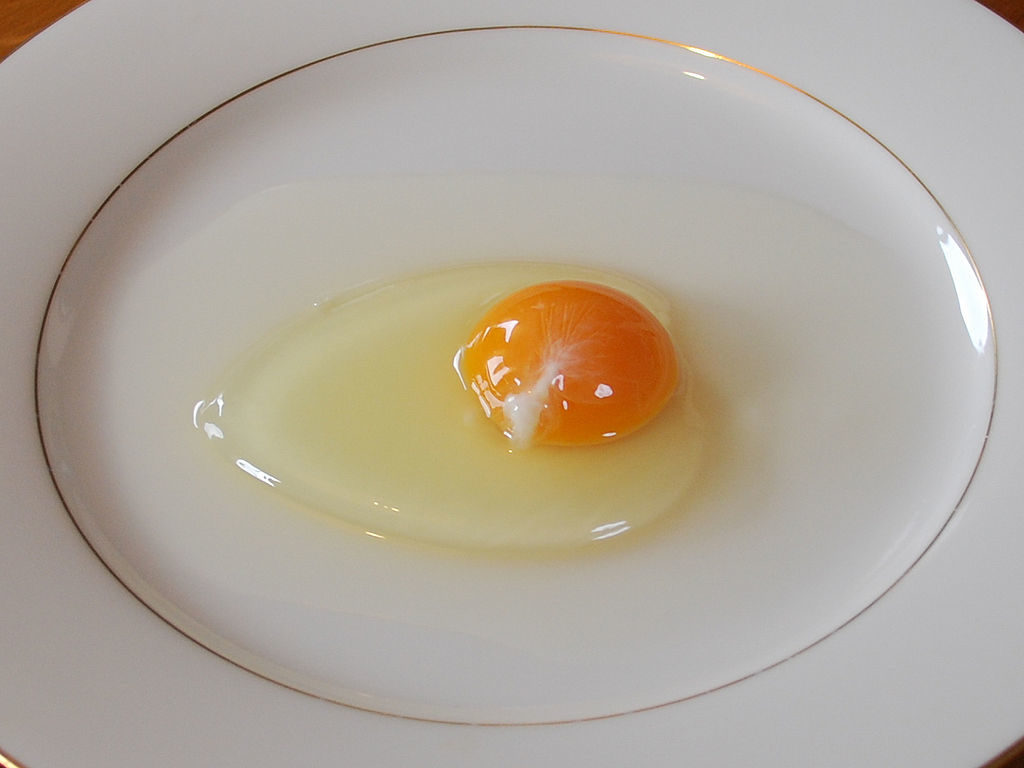 photo showing an uncooked egg out of its shell, with clear egg white, yellow yolk and a thick white strand of chalaza